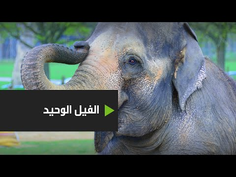شاهد حفلة وداع للفيل كافان بعد 8 أعوام قضاها وحيدًا في حديقة حيوانات باكستانيةر